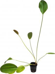 Живі рослини
