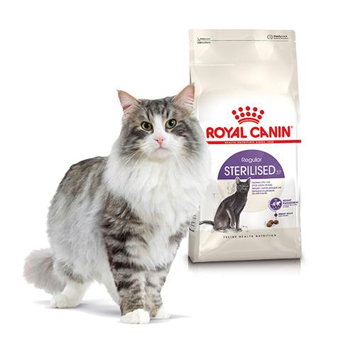 Корм для котів
